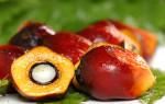 Пальмовое масло. Польза и вред