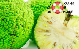 Маклюра: лечебные свойства и применение адамова яблока