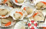 Морские гребешки. Полезные свойства