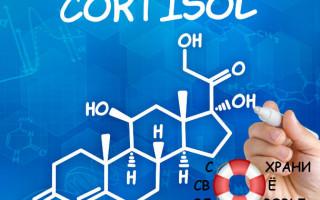 Кортизол — что это такое и почему так важен «гормон стресса»?