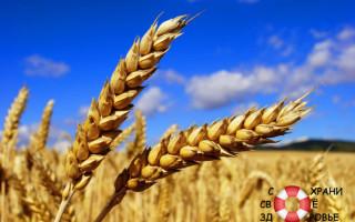 Масло зародышей пшеницы. Применение. Отзывы