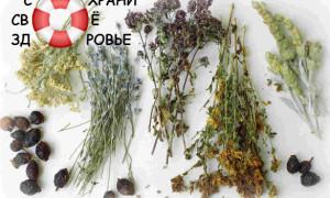 Голодание и очищение организма по Марве Оганян