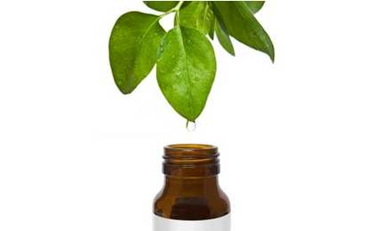 Масло чайного дерева. Применение