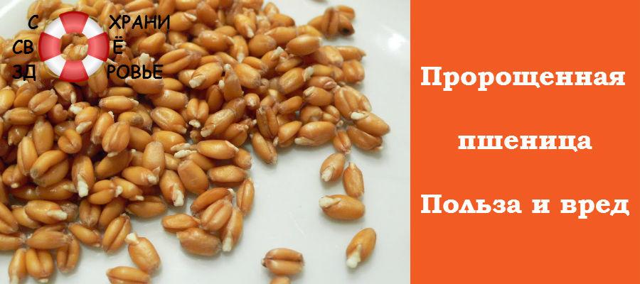 Пророщенная пшеница. Польза и вред