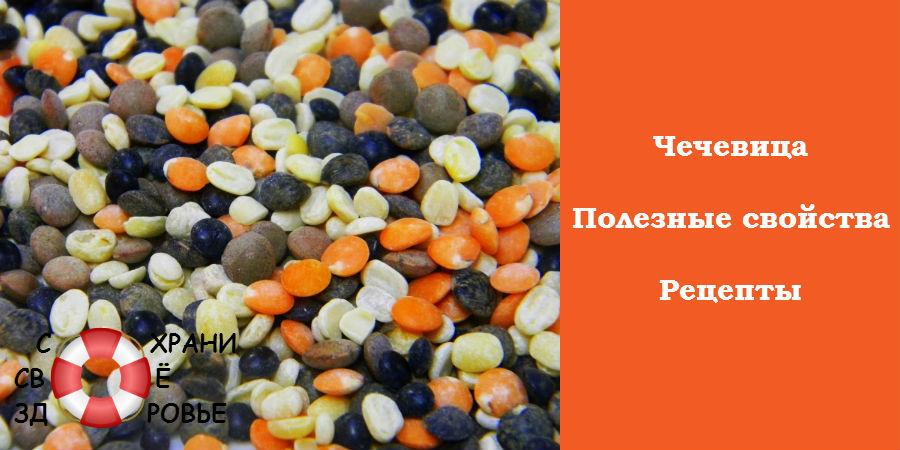 Чечевица - полезные свойства и рецепты приготовления