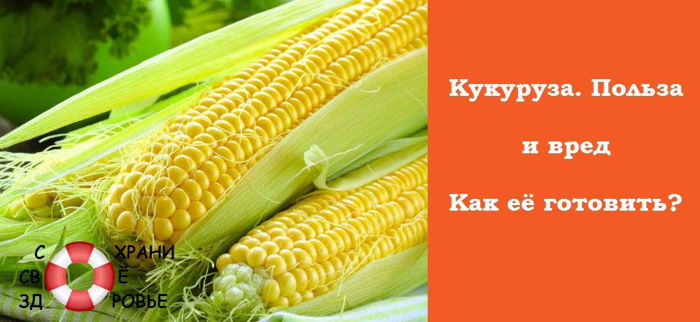 Кукуруза. Польза и вред
