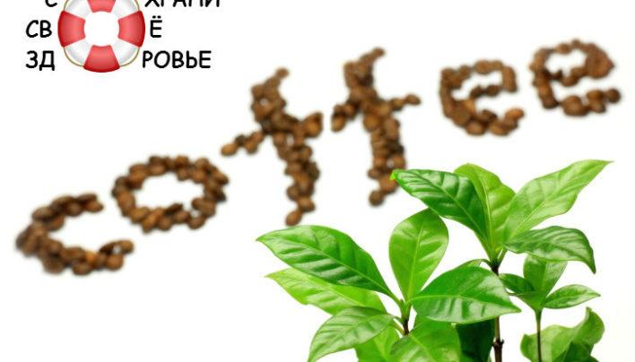 Зеленый кофе для похудения. Отзывы