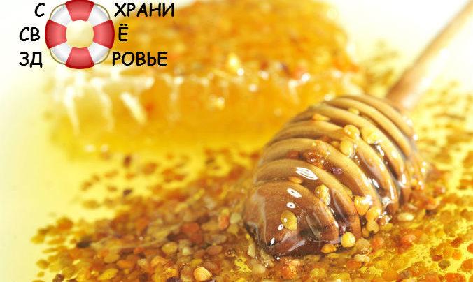 Перга пчелиная. Применение, полезные свойства и противопоказания