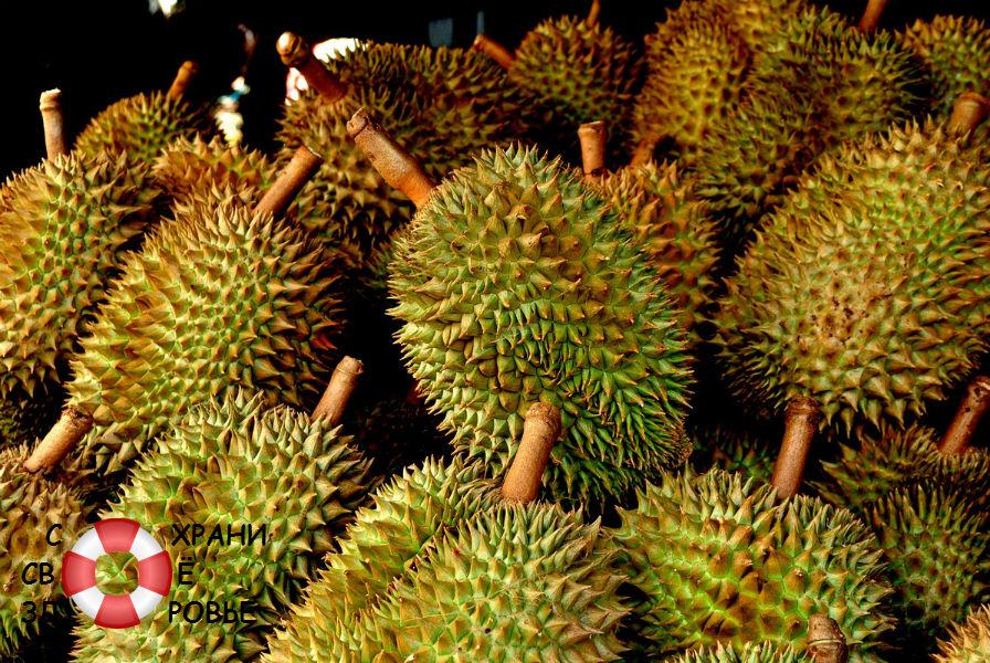 Много плодов дуриана