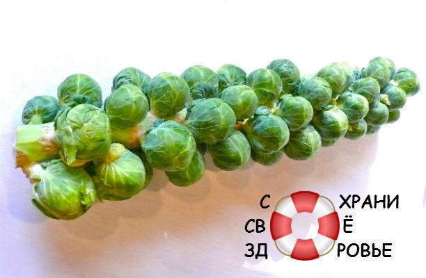 Брюссельская капуста. Полезные свойства и рецепты с бельгийским карликом