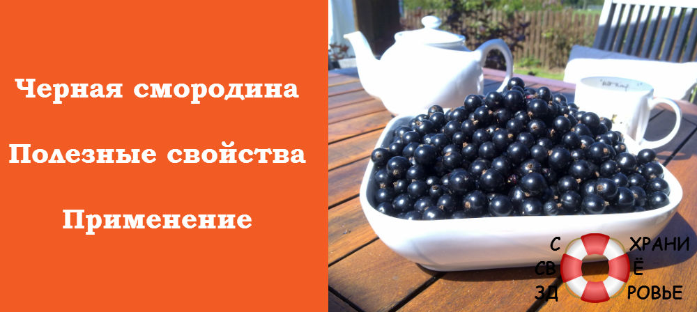Фото черной смородины