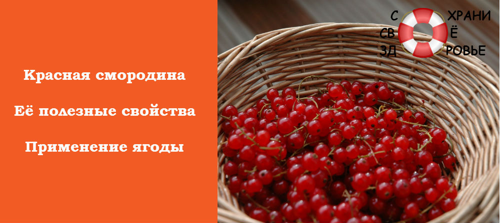 Фото красной смородины