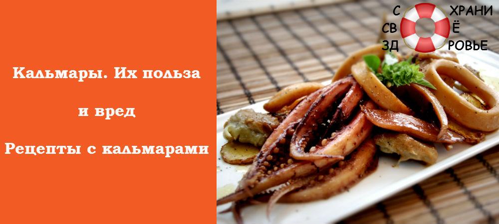 Фото кальмаров