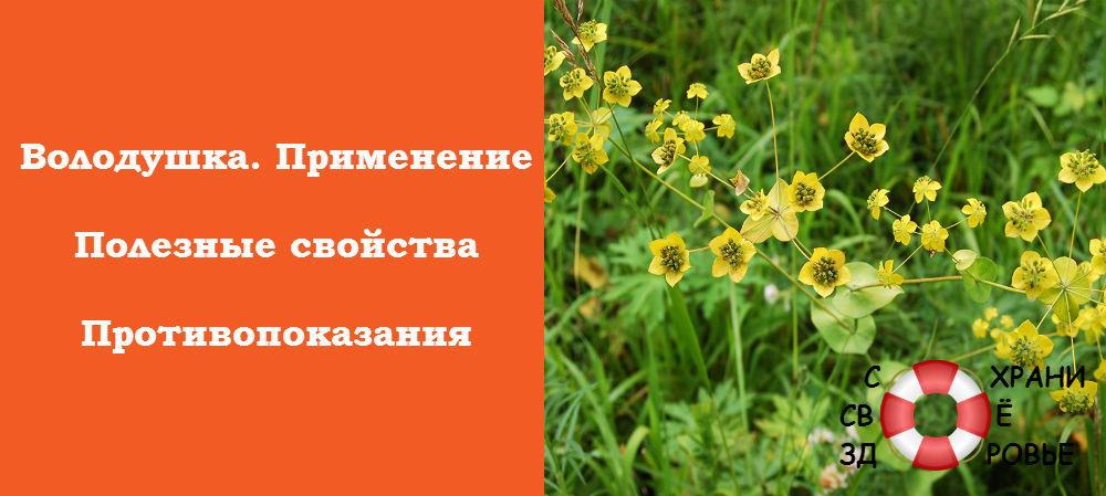 Лечебные травы (фото с названиями