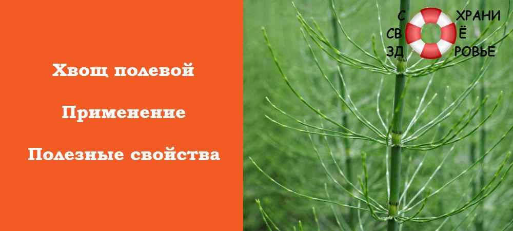 Фото хвоща полевого