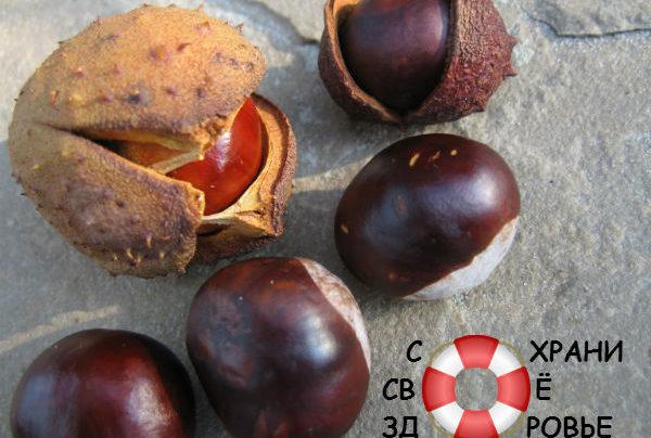 Конский каштан: его лечебные свойства и применение