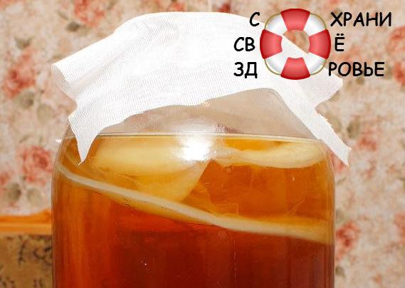 Чайный гриб. Польза и вред