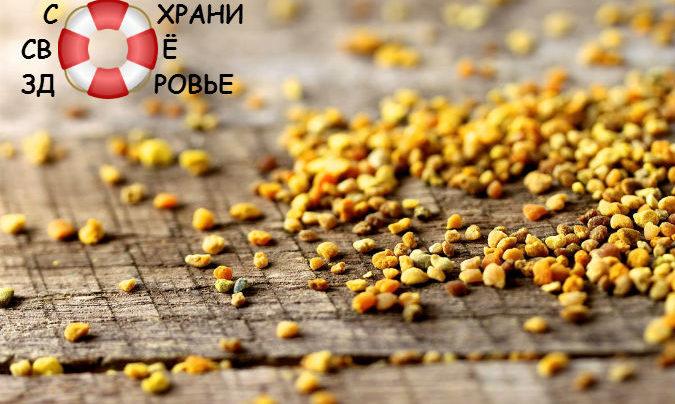 Пчелиная пыльца и её полезные свойства