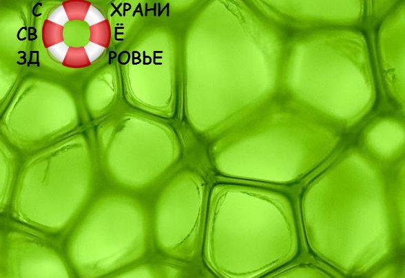 Хлорофилл жидкий: применение, отзывы