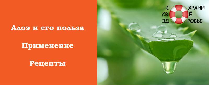 Алоэ: лечебные свойства, рецепты, противопоказания и отзывы