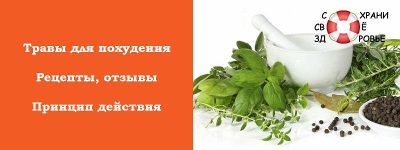 Фото трав для похудения