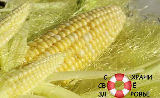 Кукурузные рыльца: их лечебные свойства и противопоказания