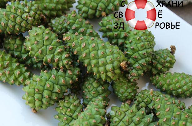 Сосновые шишки: полезные свойства и противопоказания «соснового» варенья