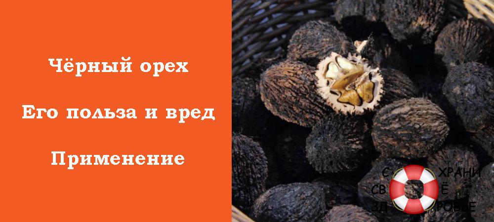 Фото чёрного ореха