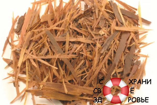 Кора муравьиного дерева: лечебные свойства и противопоказания