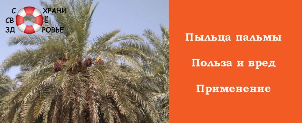 Применение пыльцы пальмы
