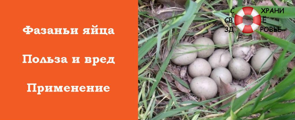 Яйца фазана: польза и вред