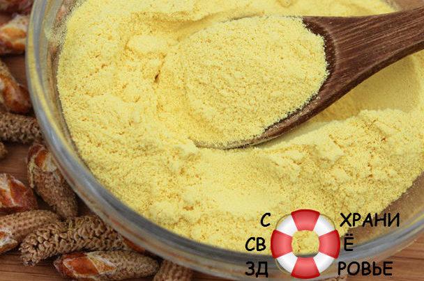 Сосновая пыльца: её польза и вред, применение и отзывы