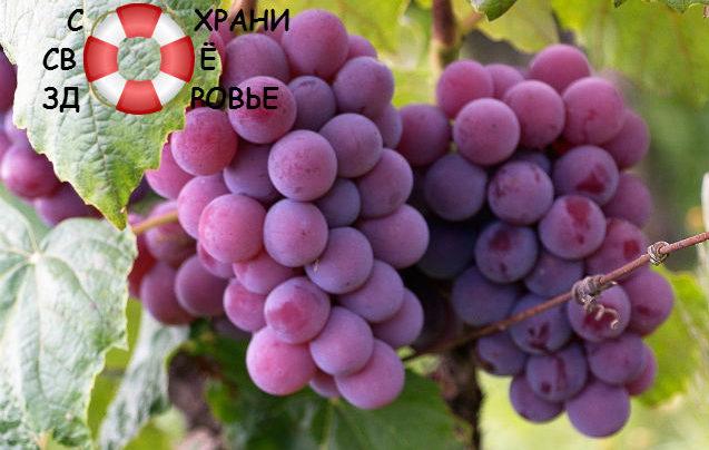 Виноградный сахар: что это такое? Его польза и вред