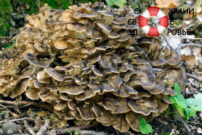 Танцующий гриб