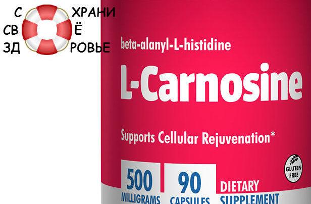 L-карнозин: его применение и полезные свойства